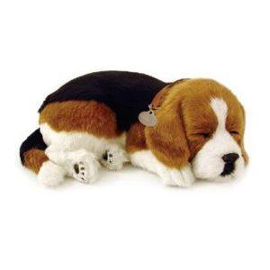 Спящий щенок Лабрадор
