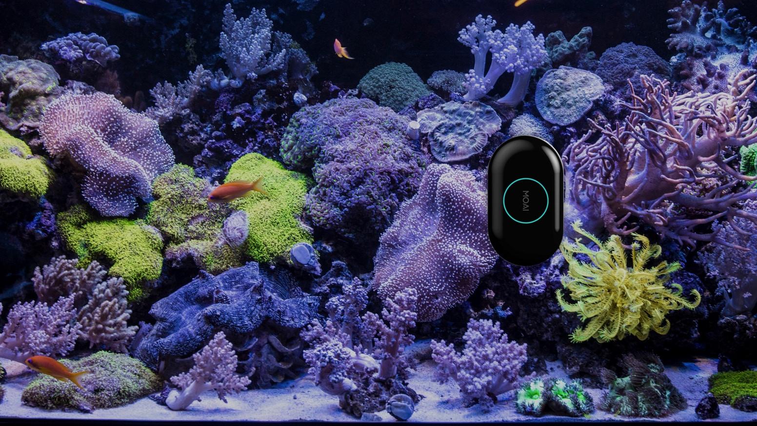 Аквариумный робот MOAI: робот для вашего аквариума